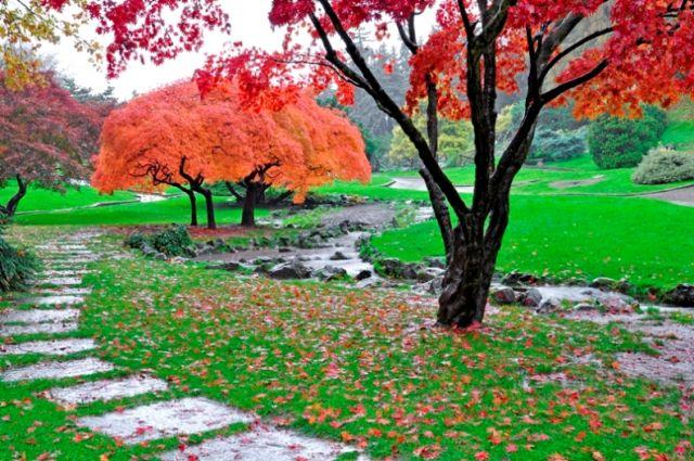 Alberi in autunno in Piemonte