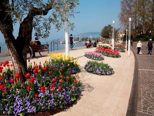 Albero e fiori nel Veneto