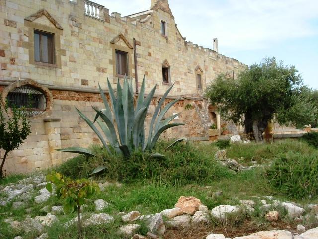 Pianta di Aloe fuori della tenuta di Al Bano