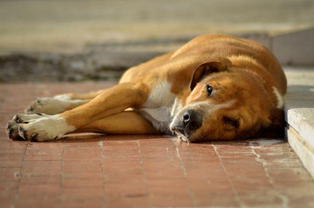 Cane addormentato - Molise