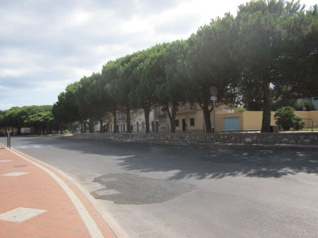 Strada ed alberi a Sant'Antioco - Movingitalia.it