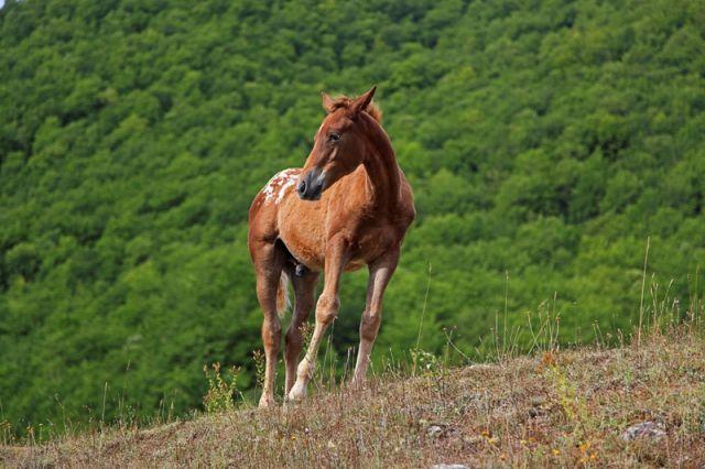 Cavallo tra il verde - Abruzzo
