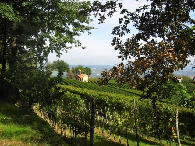 Foto panoramica dei Vigneti - Barolo - Movingitalia.it