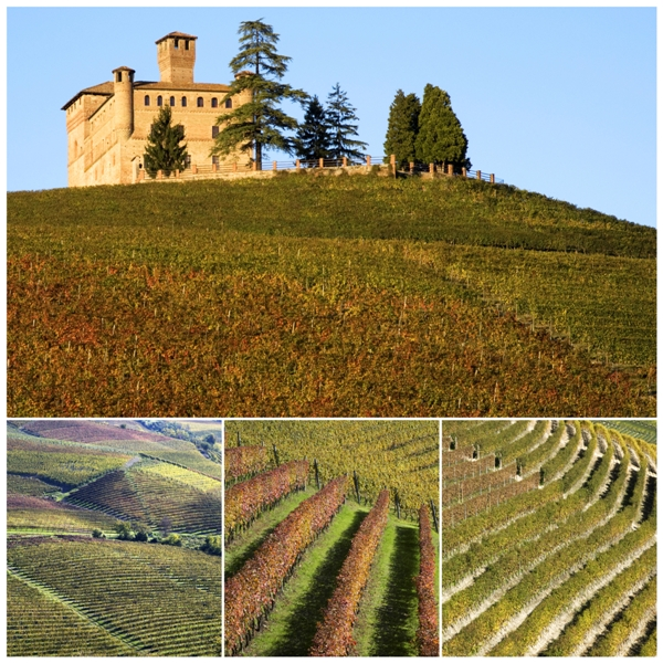 Vigneti sulle colline di Langhe con vista castello in Piemonte - Movingitalia.it