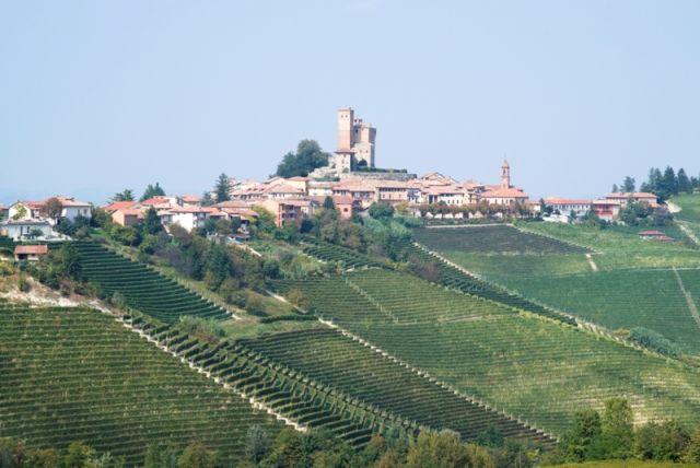 Vigneti sulle colline di Langhe in Piemonte - Serralunga d'Alba - Movingitalia.it