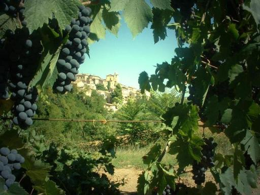 vigneti ortezzano - Movingitalia.it