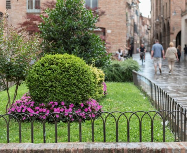 Piante a Ferrara - Movingitalia.it