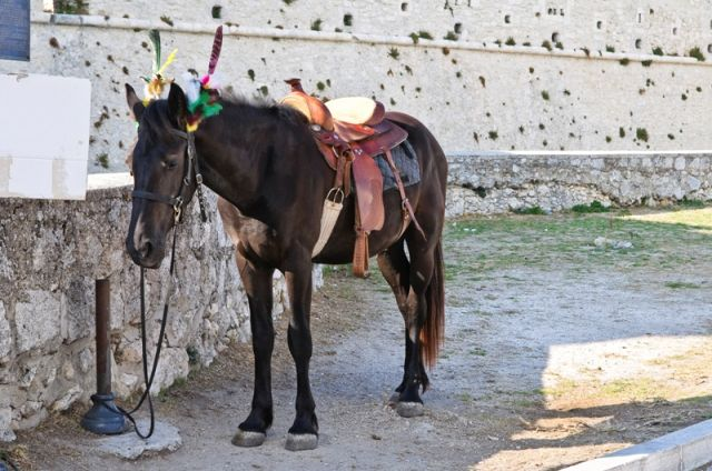 Cavallo Marrone sul Monte Sant'Angelo - Puglia - Movingitalia.it