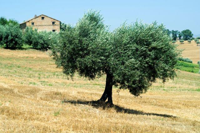 Foto panoramica Campagna di Montefano - Movingitalia.it