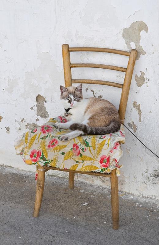 Gatto domestico sulla sedia - Basilicata
