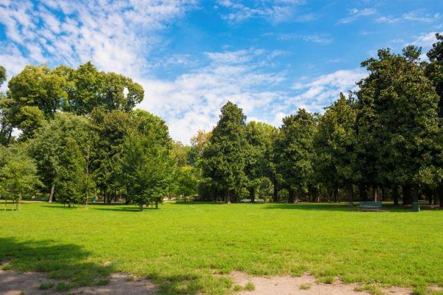 Piante e alberi a Milano