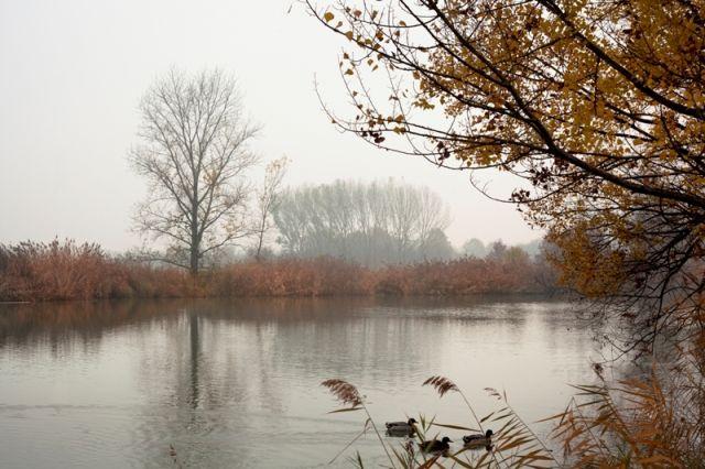 Alberi e lago in autunno a Modena
