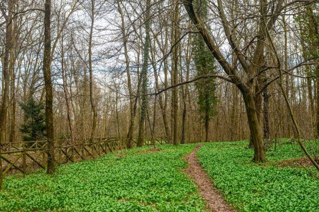 Parco a Monza piante e alberi - Movingitalia.it