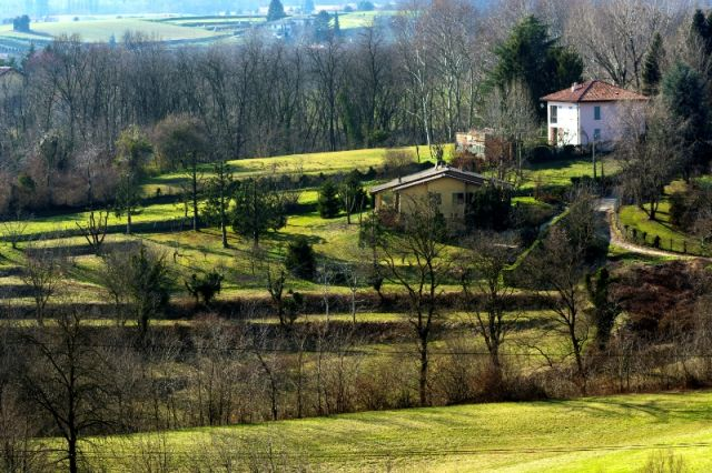 Piante e alberi a Monza - Movingitalia.it
