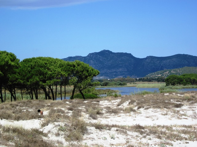 Pineta alla caletta - Movingitalia.it