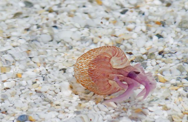 Meduse in acqua chiara - Sardegna - Movingitalia.it