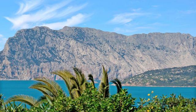 Alberi e montagna sull'Isola di Tavolara in Sardegna