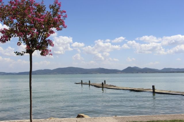 Piante a Trasimeno lago a Perugia - Movingitalia.it