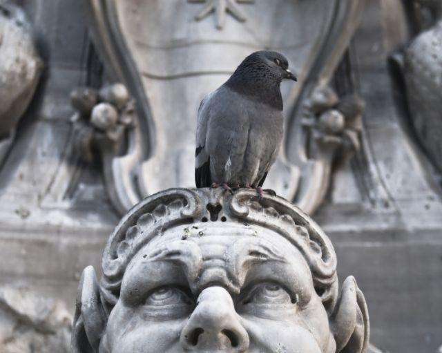 Statua e piccione a Roma - Movingitalia.it