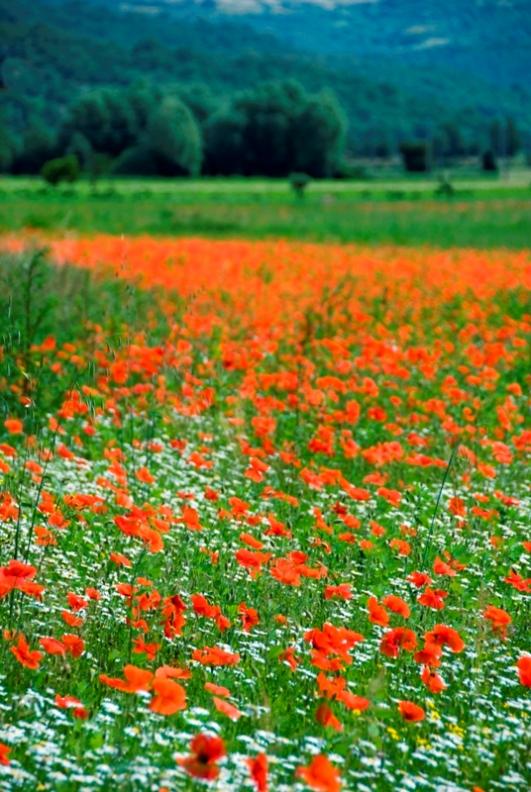 Fiori e giardino in Umbria