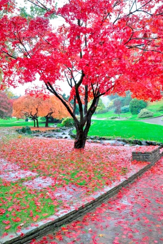 Parco a Torino in autunno in Piemonte - Movingitalia.it