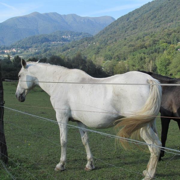 Cavallo Bianco a Ponte Tresa
