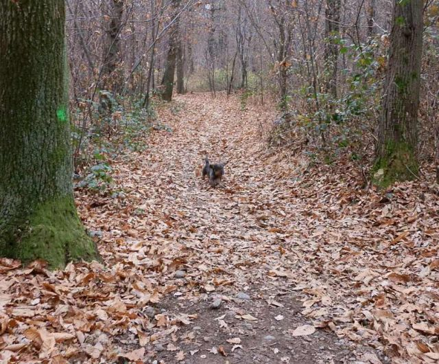 Il bosco in autunno a Varese - Movingitalia.it